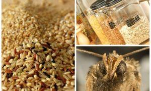 Как избавиться от пищевой моли на кухне быстро и эффективно?