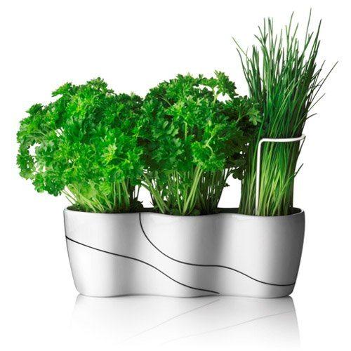 вырастить зелень на кухне