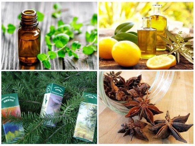 Запахи, которые отпугивают насекомых