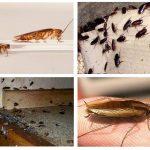 Как избавиться от тараканов: обзор лучших способов и средств против вредителей